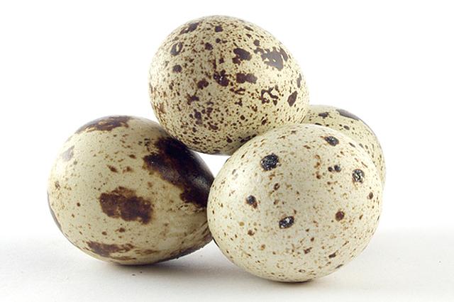 ハイドロックス社の卵殻膜ペプチド